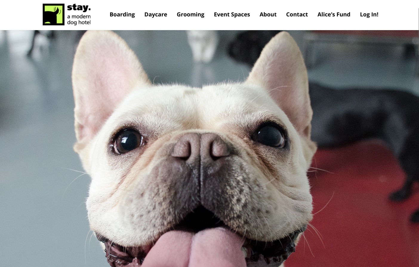 Stay. A Modern Dog Hotel Homepage
